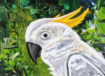 Cockatoo collage by Megan Coyle