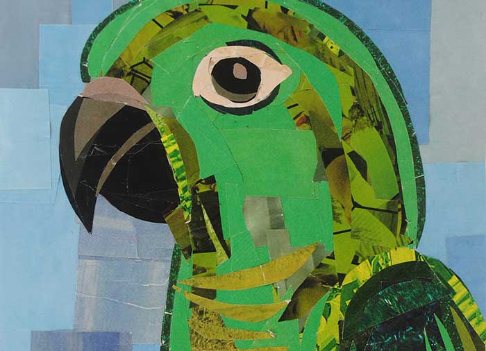 Conor the Green Conure by collage artist Megan Coyle