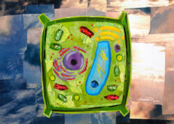 I Beleaf This is a Plant Cell by collage artist Megan Coyle