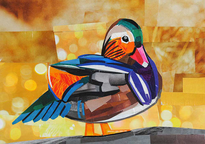 Mandarin Duck by collage artist Megan Coyle
