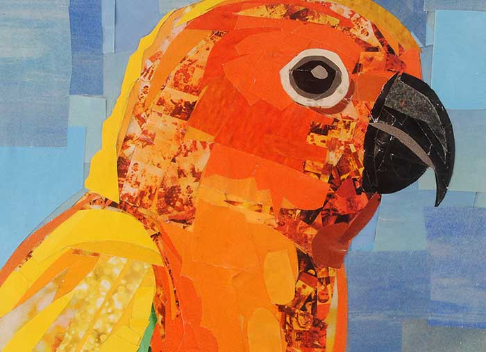 Orange Conure by collage artist Megan Coyle