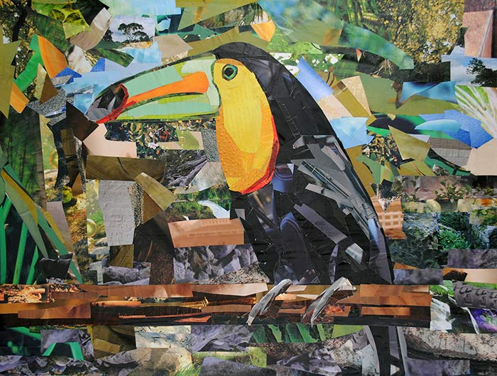 Toucan by collage artist Megan Coyle