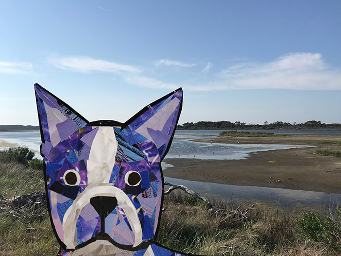 Bosty visits Chincoteague by Megan Coyle