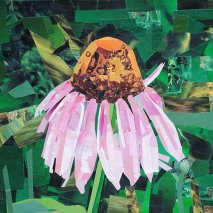 Title: Cone Flower